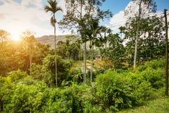 Der Dschungelsonnenuntergang Lizenzfreie Stockbilder