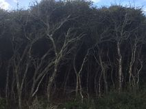 Der dunkle Wald Stockfotos