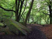 Der dunkle Waldweg, der abwärts mit großem Moos führt, bedeckte Flusssteine und hellgrüne Blätter auf hohen Waldbäumen lizenzfreies stockbild