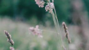 Der dunklen Film- Art Natur-Gesamtlänge des Feldes stock video