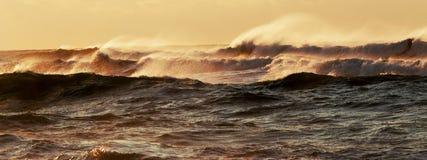 Der durchgebrannte Wind bewegt während Hurrikan hermine wellenartig stockbild
