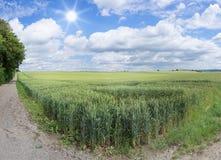 An der Ecke eines Weizenfeldes im Sommer Lizenzfreies Stockfoto