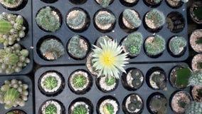 Der ein Kaktus lizenzfreie stockfotografie