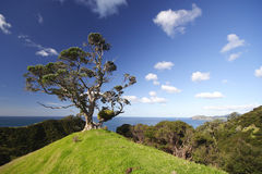 Der einsame Baum Lizenzfreie Stockfotos