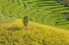 Der einsame Baum Lizenzfreie Stockfotografie