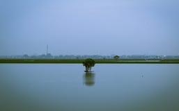 Der einsame Baum Stockbilder
