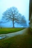 Der einsame Baum auf dem Gebiet am nebeligen Tag Stockfotos