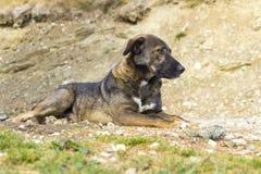 Der einsame Hund Stockbilder