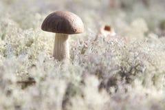 Der einsame Pilz Stockbild