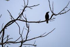 Der einsame Vogel auf die Baumspitze stockbild