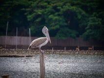 Der einsame Vogel im Zoo Stockfotos