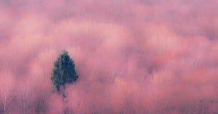 Der einzelne Nadelbaum im rosa Wald lizenzfreie stockfotos