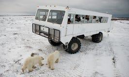 Der Eisbär kam sehr nah zu einem speziellen Auto für die arktische Safari kanada Nationalpark Churchill Lizenzfreie Stockfotografie