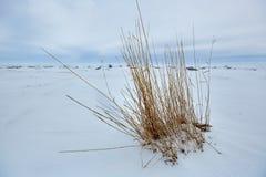 Der Eishügel auf See Balkhash Stockfoto
