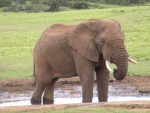 Der Elefant Lizenzfreies Stockbild
