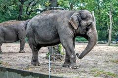 Der Elefant Lizenzfreie Stockbilder