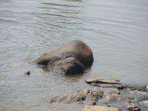Der Elefant badet Lizenzfreie Stockbilder