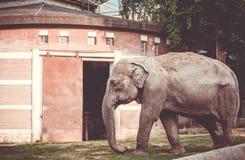 Der Elefant, der in den Käfig geht Stockfotografie