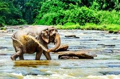 Der Elefant goss Wasser von seinem Stamm während eines Bades im Pinnawala-Elefant-Waisenhaus, Sri Lanka stockfotos