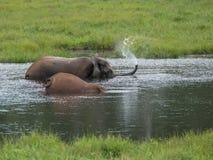 Der Elefant ließ den Brunnen ihres Stammes Lizenzfreie Stockfotos