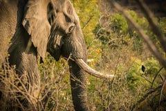Der Elefant und der Vogel Stockfoto