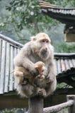 Der emeishan Affe Stockbilder