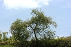 Der enorme alte Baum Stockfoto