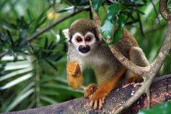Der Entwurfs-Affe? Stockfotografie