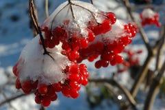 Der erste Frost. Stockbild