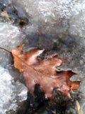 Der erste Frost im Garten lizenzfreie stockbilder