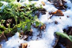 Der erste kalte Schnee stockbilder