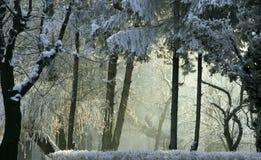 Der erste Schnee Stockbild