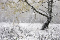 Der erste Schnee Lizenzfreies Stockbild