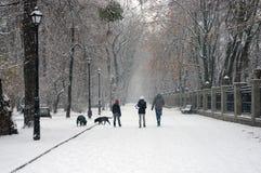 Der erste Schnee der Jahreszeit Stockfoto