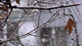 Der erste Schnee Die Ansicht vom Fenster Geduscht mit Herbstlaub stock video