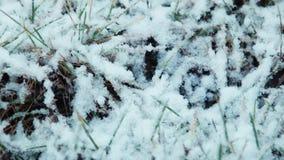 Der erste Schnee fällt auf ein Gras stock video