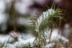 Der erste Schnee im Oktober Lizenzfreie Stockbilder