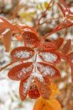 Der erste Schnee liegt auf den gelben und roten Blättern stockbilder