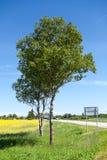 Der europäische Weg E20 überschreitet durch das Estland-Land Nationale Hauptstraße Tallinn-Narva an der Sommersaison Lizenzfreie Stockbilder