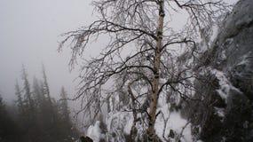 Der Fänger im Nebel Stockfotos