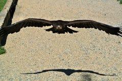 Der Falke Lizenzfreies Stockbild