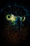 Der Falke Lizenzfreie Stockfotografie