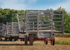 Der Falke des Fassbinders (Accipiter cooperii) sitzt auf leerem Hay Wagon Stockbild
