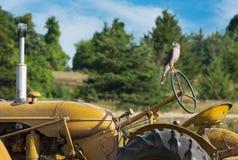 Der Falke des Fassbinders (Accipiter cooperii) steht OM-Rad von altem Tracto Lizenzfreies Stockbild