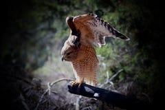 Der Falke-Landung des Fassbinders Lizenzfreies Stockfoto