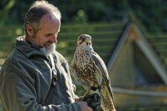 Der Falkner Mursa, das heraus Falken zeigt Lizenzfreies Stockfoto