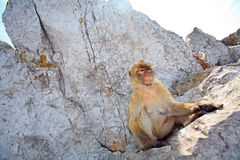 Der Fallhammer sitzt auf den Felsen Stockfoto