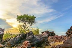 Der Felsen und einsame die Baum Bangka-Insel Indonesien stockbild