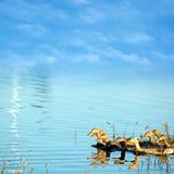 Der Feuchtgebiets-Hintergrund des blauen Himmels Lizenzfreie Stockfotos