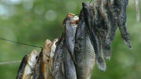 Der Fisch wird auf einem Seil getrocknet stock footage